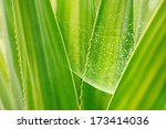 spider web in the morning | Shutterstock . vector #173414036