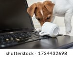 Dog Spilled Coffee On Computer...