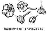 set of garlic vector... | Shutterstock .eps vector #1734625352