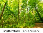Thick Green Foliage Of The...