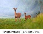 Two Different Species Of Deer...