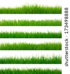 green grass on white   Shutterstock . vector #173498888