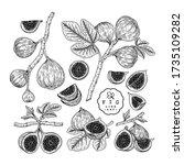 vector sketch fruit decorative... | Shutterstock .eps vector #1735109282