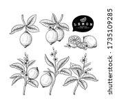 vector sketch citrus fruit... | Shutterstock .eps vector #1735109285