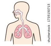 respiratory system and... | Shutterstock .eps vector #1735150715