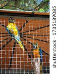 Caged Blue And Yellow Macaws ...