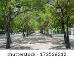 Tree Lined Avenue Paseo De La...