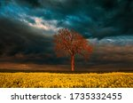 Lonely Tree On Rapeseed Field...