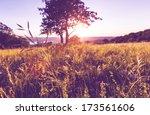 summer meadow | Shutterstock . vector #173561606