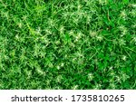 Abstract Background Of Green...