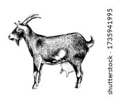 hand drawn goat. farm animal.... | Shutterstock .eps vector #1735941995