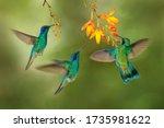 Hummingbird flight. green...