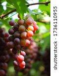 Beautiful Grape Image. A Bunc...