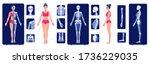 A Skeletal System Visual Aid. X ...