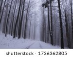 Winter Unmaintained Forest Road ...