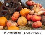 Pumpkin Background Many Orange...
