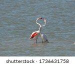 Couple Of Pink Flamingo...