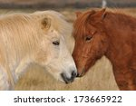 two horses | Shutterstock . vector #173665922