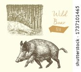 Wild Boar And Forest  Vintage...