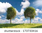 Two Poplar Trees On A Green...
