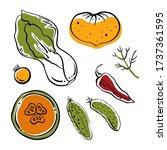 pak choi  cucumbers  tomatoes ... | Shutterstock .eps vector #1737361595