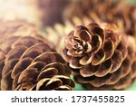 Two Pine Cones Fallen On The...