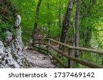 Forest  Slovenia  Triglav...