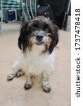 Small  Mixed Breed  Black And...