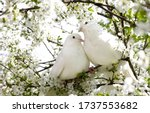 Two White Doves With Love....