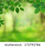 spring background   Shutterstock . vector #173792786