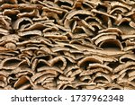 Small photo of Stack of harvested cork bark planks stripped from cork oak tree (quercus suber) and stacked on pallet at cork farm