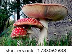Macro Of Mushroom  Also Known...