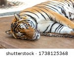 chained bengal tiger lying on... | Shutterstock . vector #1738125368