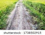 Pathway Pass Through Natural...