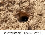 Minks Nest From Birds Swiftly...