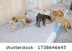 A Flock Of Stray Dogs On The...