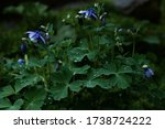 Blue Wildflowers In The Green...