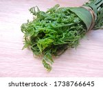 Small photo of The vegetable fern is an edible fern found throughout Asia and Oceania. It is probably the most commonly consumed fern. It is also known as Fiddle head fern. Scientific name - Diplazium esculentum.