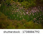 decorative bow. flowers of...