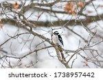Virginia Winter Snow Season And ...