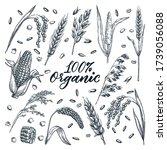 Organic Ears Grain Set ...