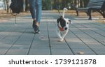 Woman Walking With Dog In Park. ...