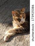 cat   Shutterstock . vector #173925386