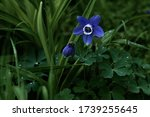 Blue Flowers Grow In The Grass...