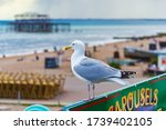 Brighton  Uk   June 2014  A...
