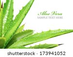 aloe vera plant isolated on... | Shutterstock . vector #173941052