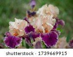 Watercolor Set Of Irises ...