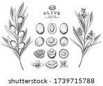 vector sketch olive decorative... | Shutterstock .eps vector #1739715788