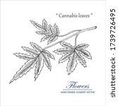 sketch floral botany collection.... | Shutterstock .eps vector #1739726495
