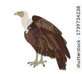 Vulture Vector Illustration...